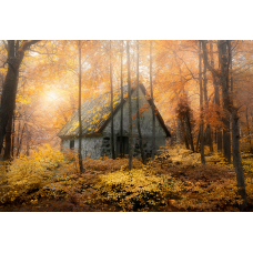 Huset i skogen